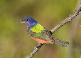 north-beach-birding